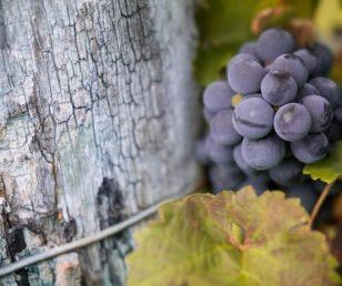"""""""Degustazione in Giardino"""" - I vini della Cantina Moschioni"""